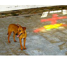Dog With God - Anglican Church, St Georges, Grenada Photographic Print