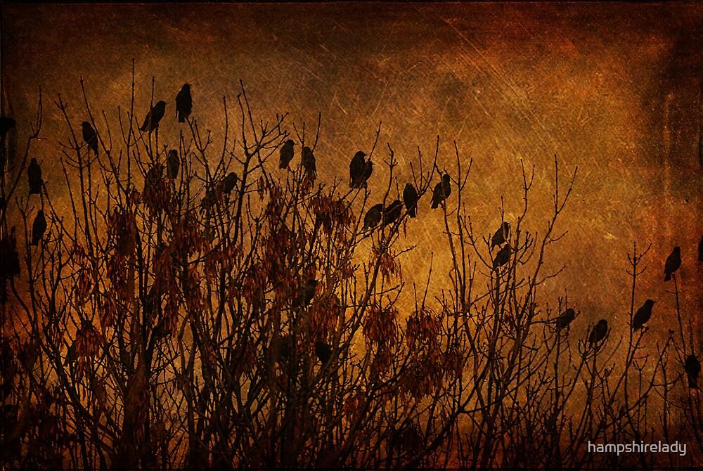 The Birds by hampshirelady