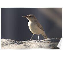 Curious Bird Poster
