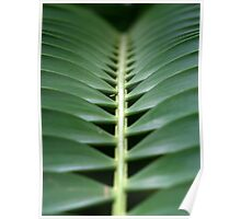 Spine of a palm leaf Poster