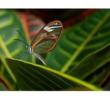 Invisible Butterfly Photographic Print