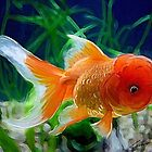 Oranda goldfish by Cazzie Cathcart