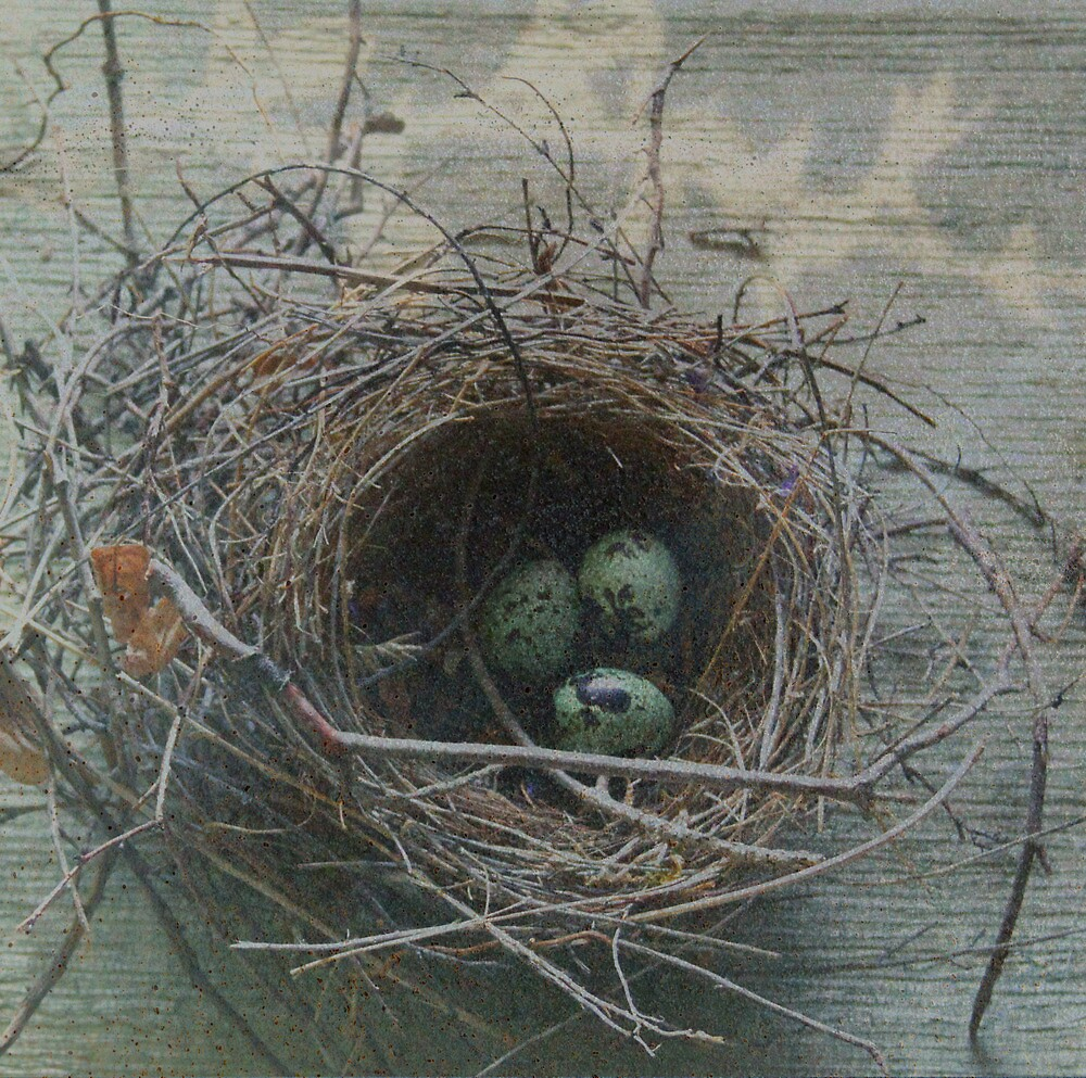 Nest Series: 1 by Leslie Guinan