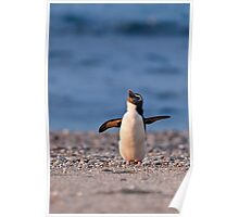 Fiordland Crested Penguin - New Zealand Poster