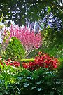 Toowoomba garden by Margaret  Hyde