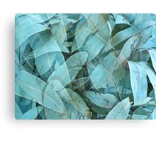 Eucalypus tree leaves 1 Canvas Print