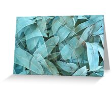 Eucalypus tree leaves 1 Greeting Card