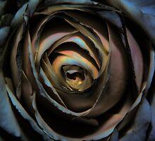 White Rose by Dean Messenger