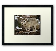 Are you looking at ME! Framed Print