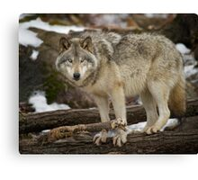 Are you looking at ME! Canvas Print