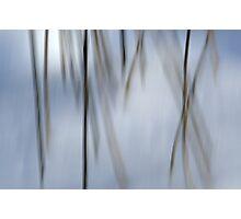 Dancing Twigs Photographic Print