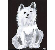 Furry Pet Photographic Print