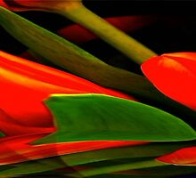 """Tulips in Abstract"" by Elfriede Fulda"