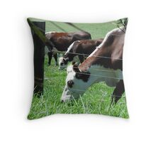 Brown and white cows grazing in the sun Throw Pillow
