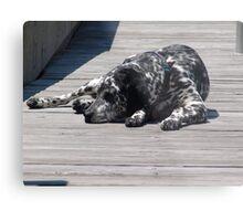 Kokomo, the Dockmaster's Dog Metal Print
