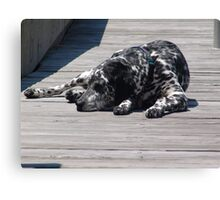 Kokomo, the Dockmaster's Dog Canvas Print
