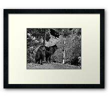 Zulu Framed Print