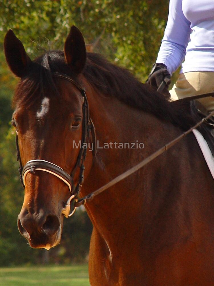 Dressage Class -  by May Lattanzio