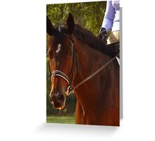 Dressage Class -  Greeting Card