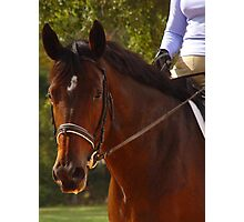 Dressage Class -  Photographic Print