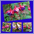 Dancing Fuchsia Belles - Summer Flowers Collages by BlueMoonRose
