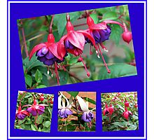 Dancing Fuchsia Belles - Summer Flowers Collages Photographic Print