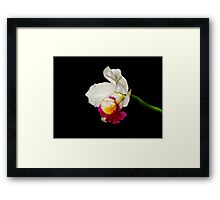 Orchid Collection - 1 Framed Print