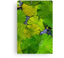 Waterlilies in HDR Canvas Print
