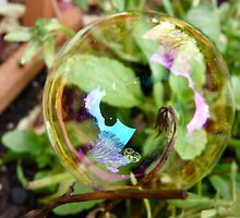bubble on a twig by tego53