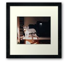 Adolescent Kittens Framed Print