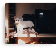 Adolescent Kittens Canvas Print