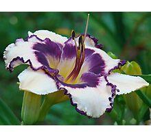 Day Dreamer VIIII ~ Purple & White Photographic Print