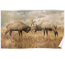Elk Rut 1 Poster
