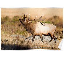 Elk Rut 2 Poster
