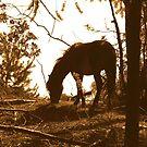 Horse in Sunlight by ienemien
