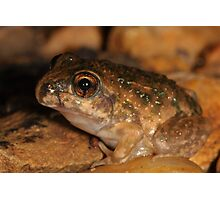 Bilingual Froglet Photographic Print