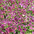 A ground full of purple by Peter Chown