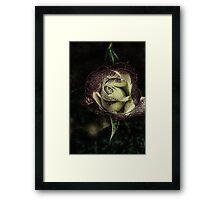 Enchanted Rose.... Framed Print