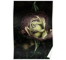 Enchanted Rose.... Poster