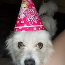 Poppy the Party Pooch by Sharon Williams