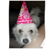 Poppy the Party Pooch Poster