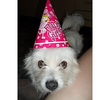 Poppy the Party Pooch Photographic Print