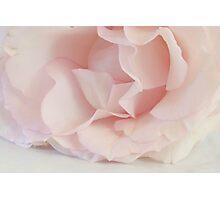 Sweet Pink Photographic Print
