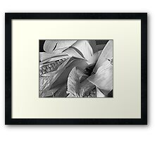 Corn Paper  Framed Print