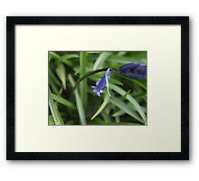 Bleu Belle Framed Print