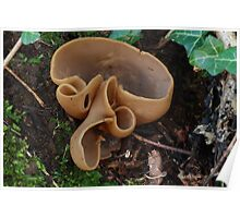 Mushroom Poster
