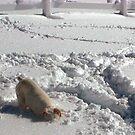 Snow Dawg by © Loree McComb