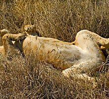 Sleeping beauty (II) by Konstantinos Arvanitopoulos