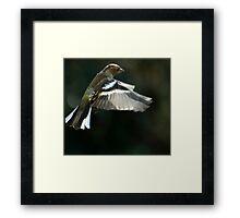Chaffinch Framed Print