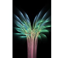 Flowers and colours flames Photographic Print